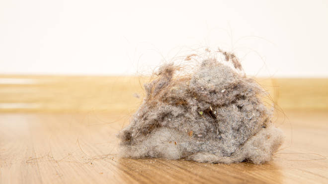 Dust could be making you fat! Time for a spring clean.