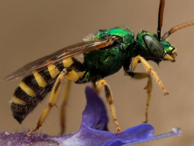 Sweat bees were found in the women's eyelids
