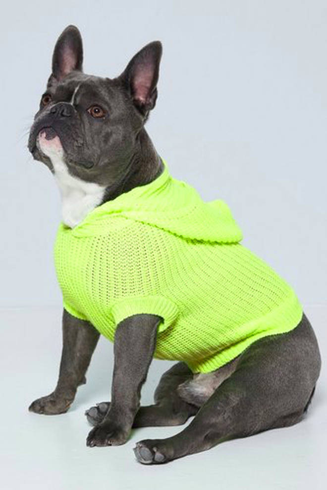 The cute range of pet jumpers cost just £8 come in sizes small, medium and large
