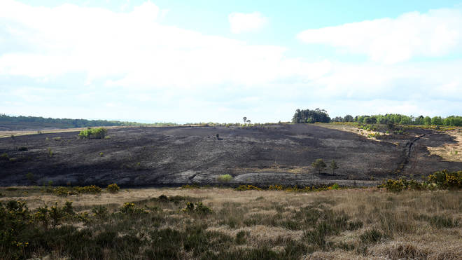 The scene of a fire at Ashdown Forest in East Sussex.