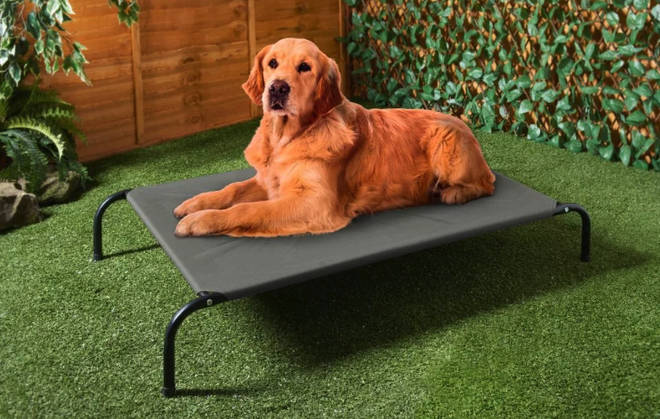 Dogs can now enjoy the sun on their own lounger