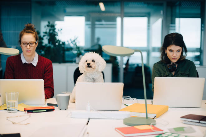 Bring Your Dog To Work Day is almost upon us!