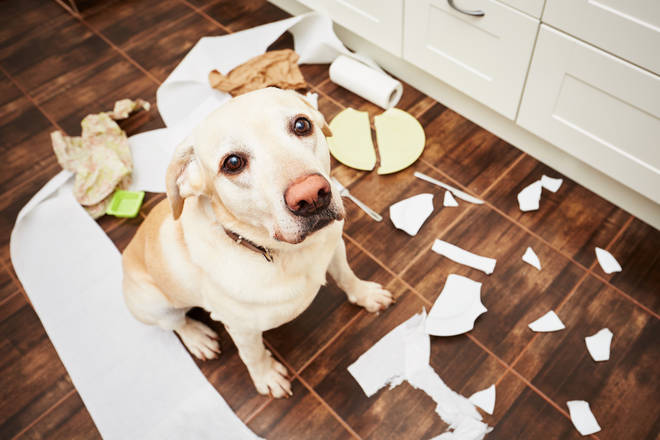 Is your dog the naughtiest in the land? Read on...