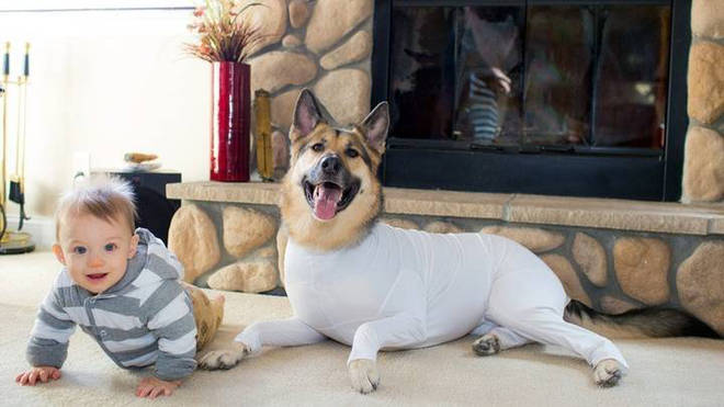 The onesie can make the dogs match their owners when they lounge about the house