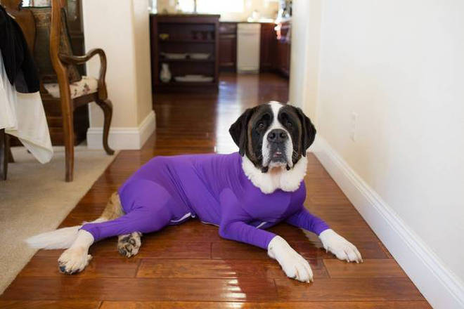 Dogs of all kinds will fit into the onesies and they look great