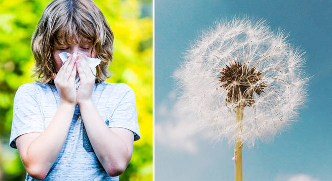 Hay fever suffers have been warned about 'Thunder fever'