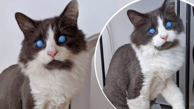 Louie the blind cat was rescued as a kitten and is now an Instagram star.