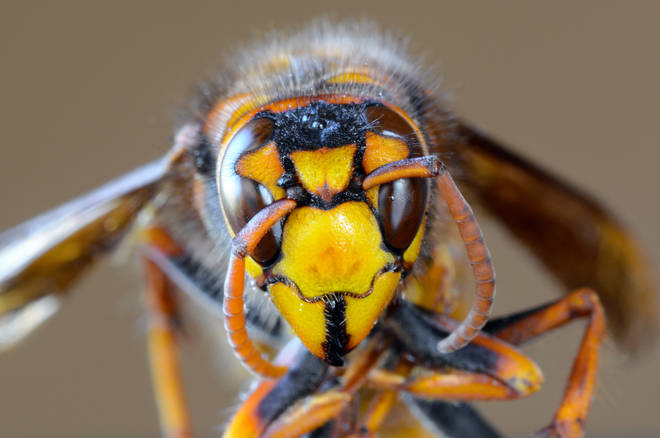 Devon residents have spotted what they believed to be Asian Hornets