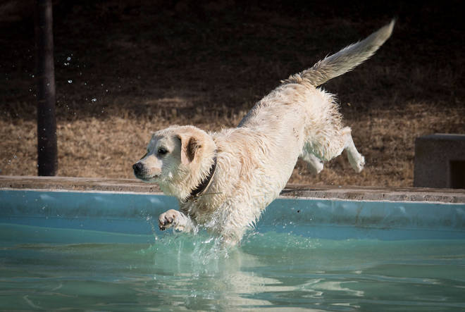 Pets need help staying cool.