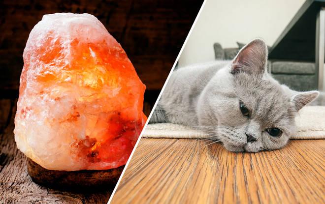 himalayan salt lamps bad for cats