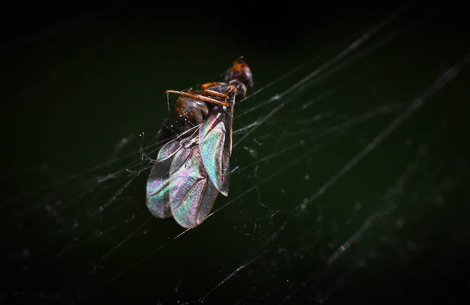 The flying ants are annoying little creatures