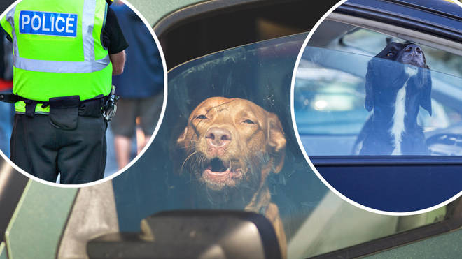 This is what you should do if you see a dog locked in a hot car