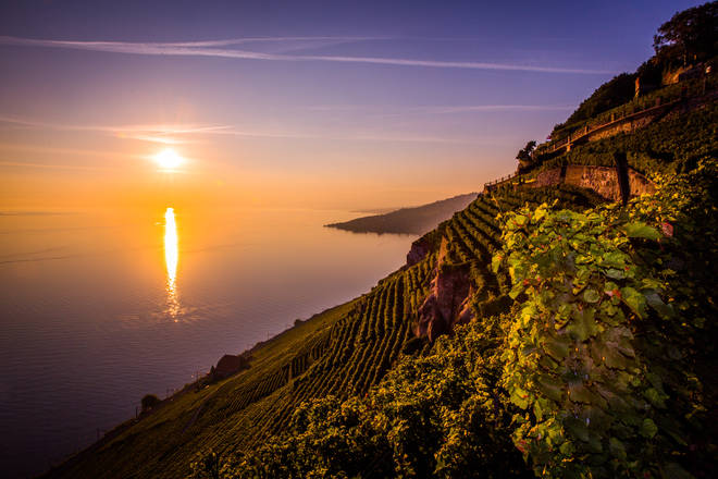 Lavaux vineyards, outside the city of Lausanne