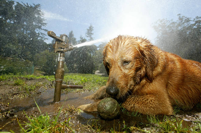 Hot weather can be fatal for dogs, who can die from heatstroke in a matter of minutes.