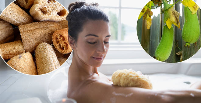 People are just finding out what a loofah is made of