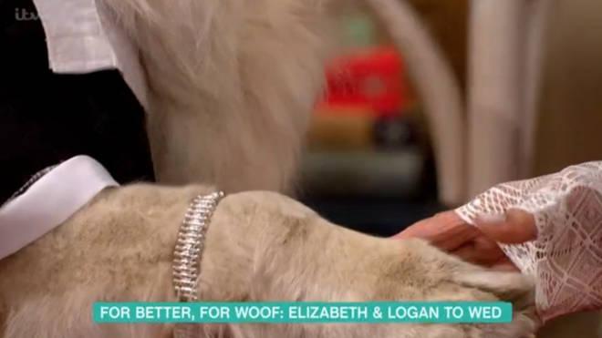 Elizabeth gave her pooch a diamond bracelet instead of a ring