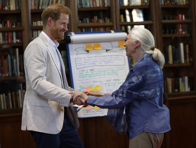Prince Harry's interview was with Dr Jane Goodall