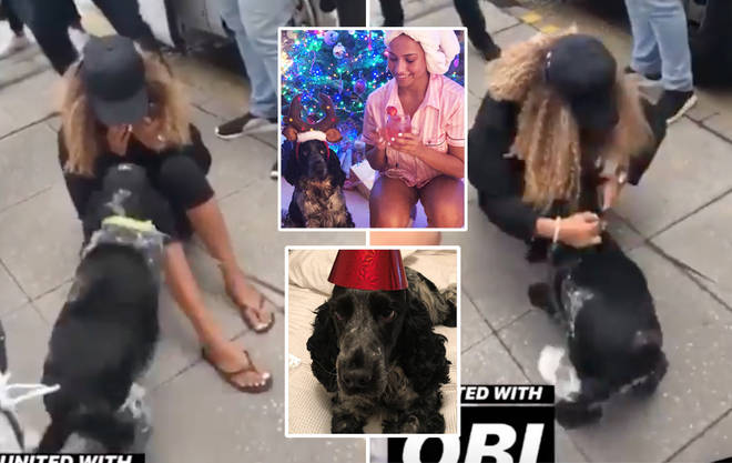 Amber Gill was left in tears as her dog Obi ran to greet her