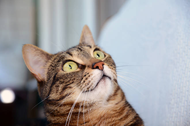 House cats were found to recognise the sound of their own name