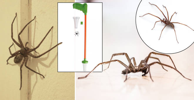 Here's how to get rid of the spider influx in your home