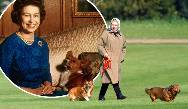 The Queen makes sure her corgis are treated to the best