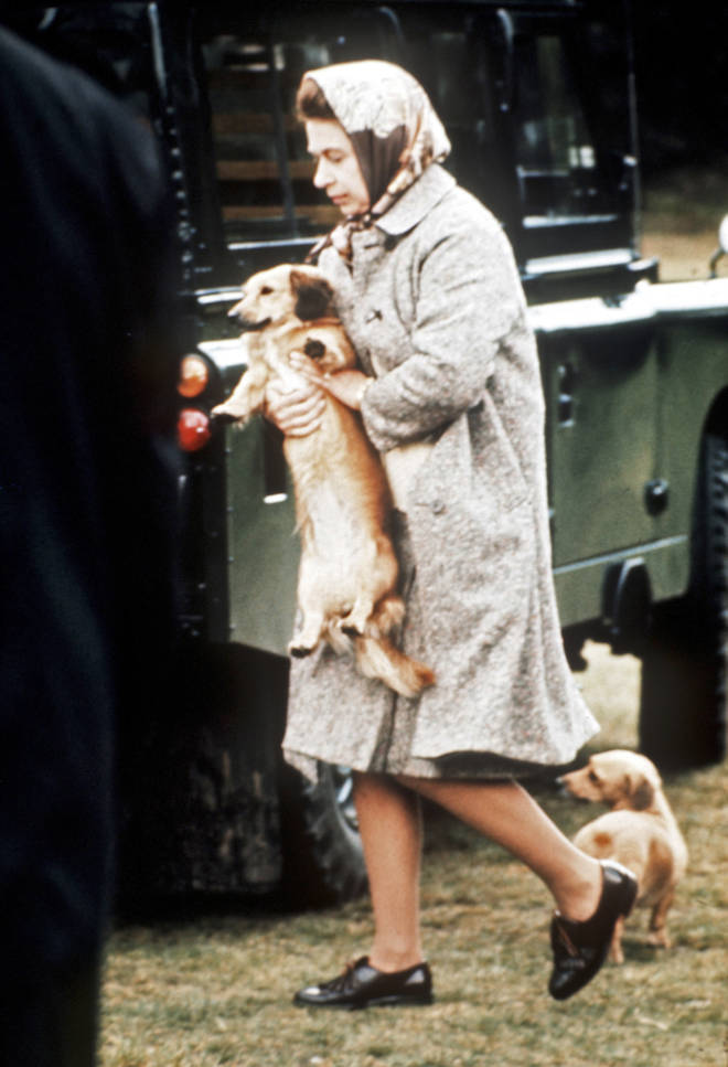 The Queen has always loved corgis, treating them to nothing but the best