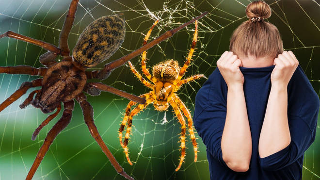 Horror for arachnophobes as new study reveals spiders are getting ANGRIER amid weather chaos