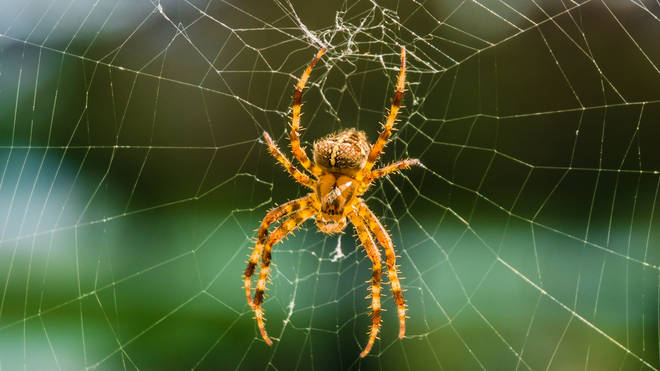 In storm-prone regions, colonies of spiders are becoming angrier as the weather changes their habitats on a regular basis