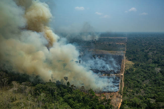 The horror blaze is damaging thousands of different wildlife species