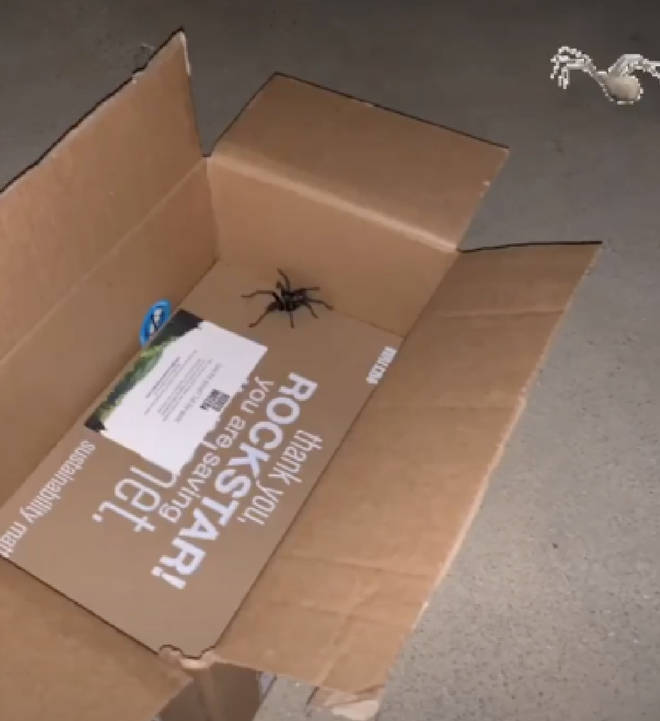 The spider was hidden in Kim's package