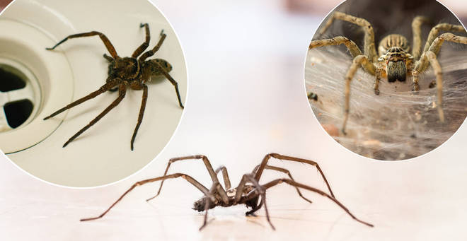 Here's which spiders will be invading your home