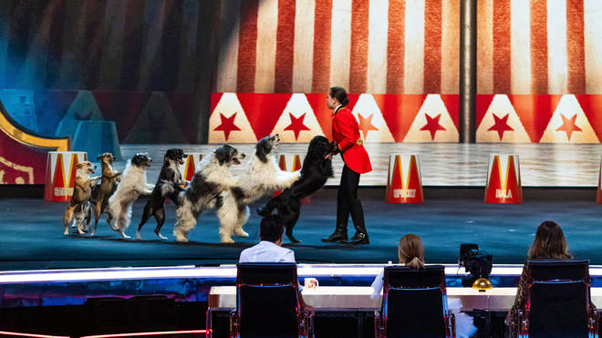 'One of the best acts we've ever seen!' Dancing dogs do the conga on Britain's Got Talent: The Champions