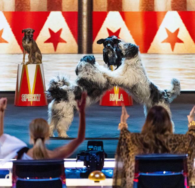 Alexa's dancing dogs Britains got talent