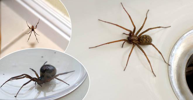 Essex has been named spider bite capital