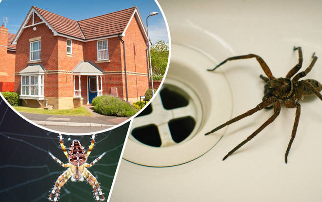 Homes are becoming increasingly full of spiders