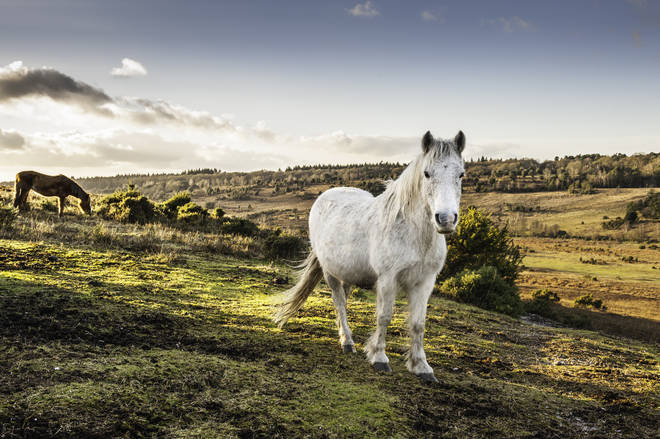 the New Forest is famed for its wild ponies, but there is much more to see and do in this beautiful part of England