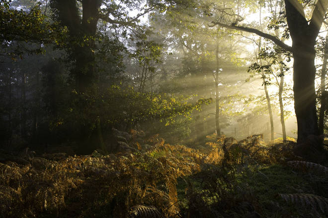 The New Forest is beautiful first thing in the morning - why not leave early and take a picnic breakfast?