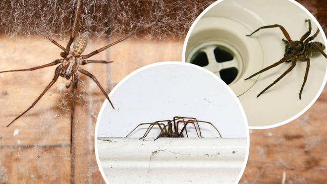 It's spider season, and people are seeing a huge amount of the creepy crawlies around their homes