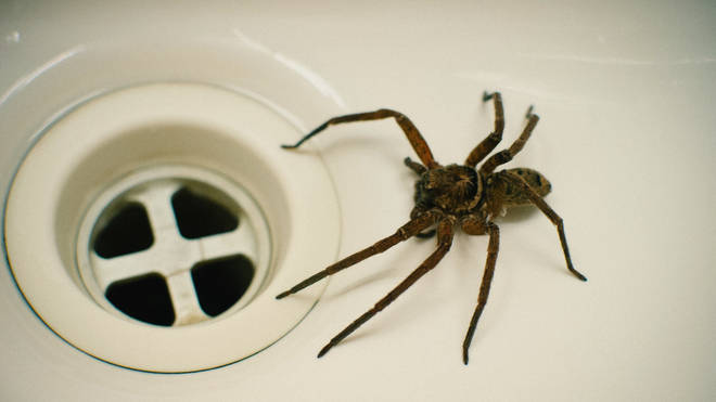Spiders are also active early in the morning, suggesting they're hiding overnight
