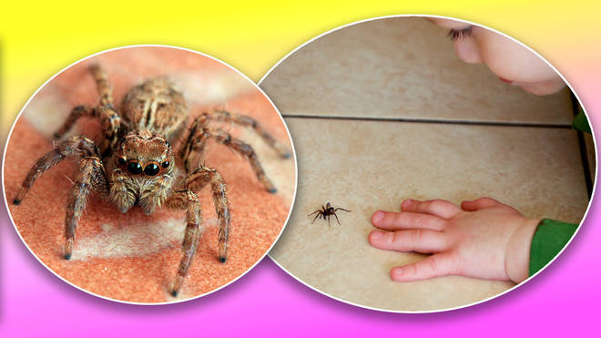 Spiders in your house? Here's how to get rid of them