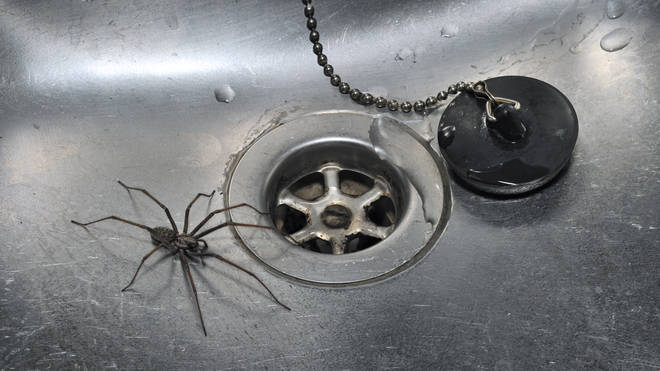 Science says you shouldn't kill spiders.
