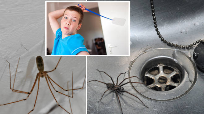 Why you shouldn't kill a spider if you see one in your house