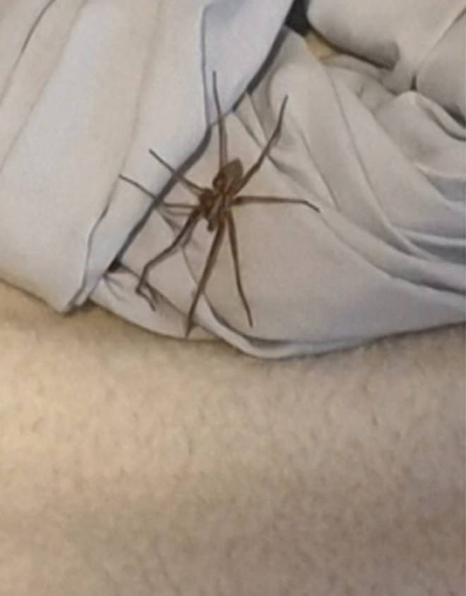 This Morning shared a montage of people's spider pictures they had sent in