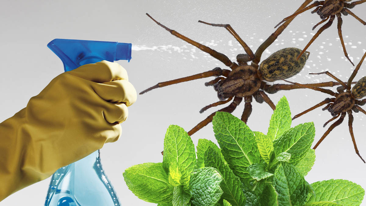 This Cheap Diy Hack Will Keep Spiders Out Of Your House This Autumn Heart
