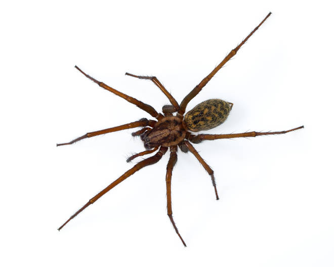 The UK is in spider season, seeing an influx of the creepy-crawlies in their homes