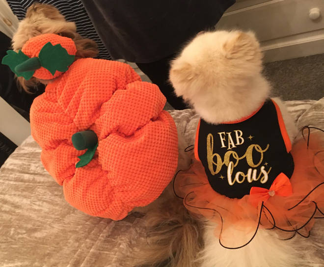 The dogs show off the back detailing of their outfits