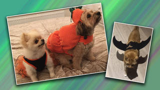 These Heart pets road tested some Halloween costumes