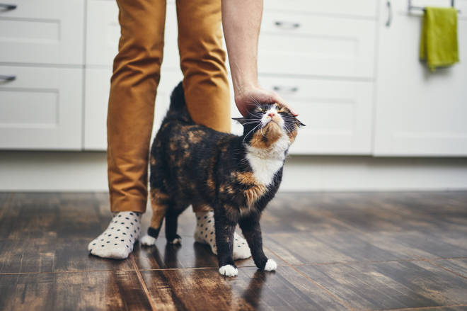 Most cat owners consider their pets a member of the family