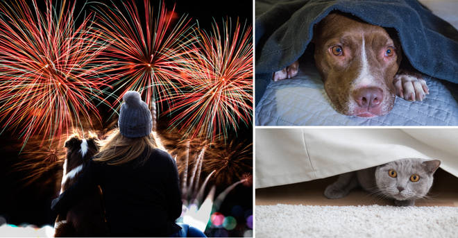 Here's how to protect your pets this fireworks night