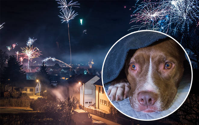 The poor puppy passed away as a result of terrifying fireworks